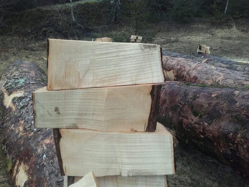 Abatage d'arbre en forêt Arlon Province de Luxembourg