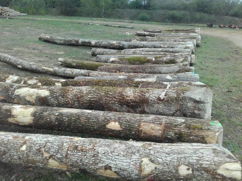 Parc à grumes de bois à proximité d'Arlon