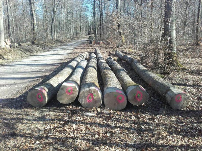 service abatage en forêt, Arlon, Habay, Messancy